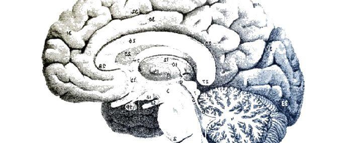 Les mystères intérieurs du cerveau - le système limbique